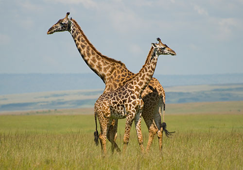 10 Days Combined Kenya and Tanzania