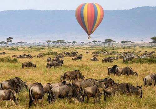 11 Days Best Of Kenya and Tanzania