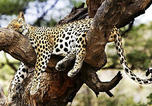 3 Days Tanzania Budget Safari Ngorongoro - Lake Manyara Safari