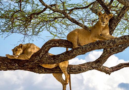 3 Days Tanzania Lodge Safari Ngorongoro Crater & Lake Manyara