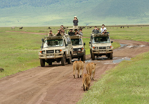 4 Days Lake Manyara National Park / Ngorongoro / Conservation Area