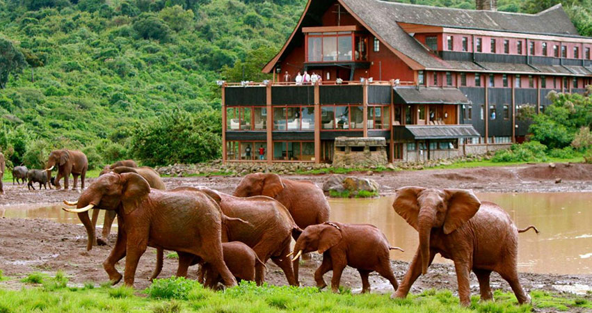 5 Days Aberdare / Lake Nakuru / Masai Mara