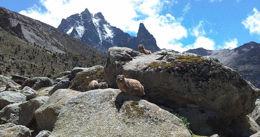 5 Days Mt Kenya Budget Climbing Naro Moru Route