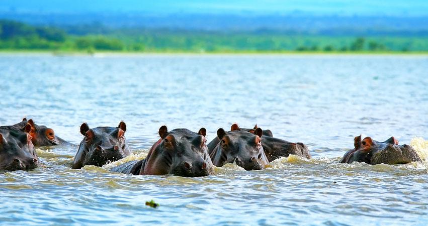 7 Days Maasai Mara / Lake Nakuru / Lake Naivasha & Amboseli