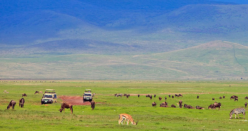 8 Days Kenya Tanzania Combined Safaris