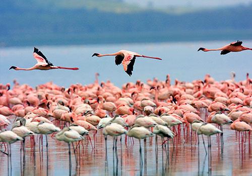 8 Days Kenya Tanzania Safaris