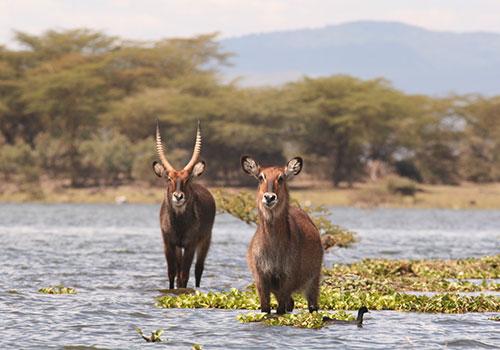 8 Days Maasai Mara / Lake Naivasha / Lake Nakuru / Aberdare & Mt.Kenya {Mau Mau Caves}