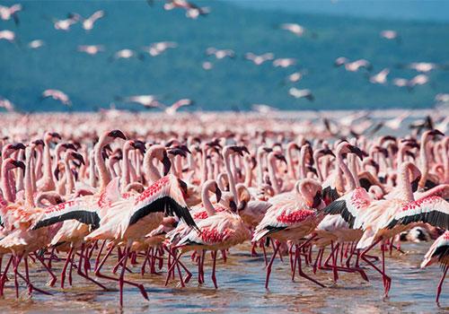 9 Days Kenya Lodge Safari Samburu / Nakuru / Baringo-Bogoria / Maasai Mara & Amboseli