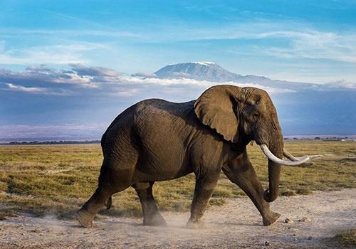 9 Days Kenya Tanzania Combined Safaris