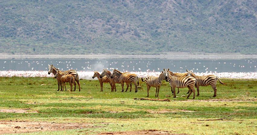 9 Days Samburu / Nakuru / Baringo-Bogoria / Maasai Mara & Amboseli