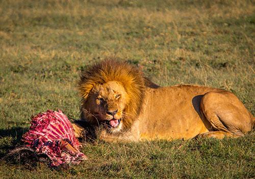3 Days Kenya budget safari Maasai Mara