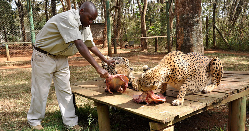 Nairobi National Park / Nairobi Safari Walk & Animal Orphanage - Minimum 2 Pax