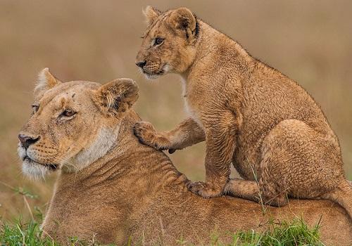 6 days masai mara camping safaris